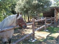 Les chevaux de Berdine